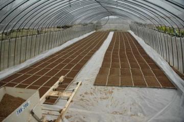 去年、Mさんが苗床を作ったのは4月4日でした