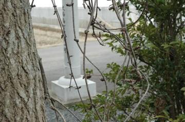 遠くから見ただけでは、単に蔓がからまり合っているだけのように見える現在のアケビですが、確実に暖かい季節にそなえて待機しています。