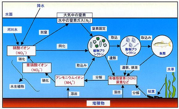 財団法人環境科学研究所の湖沼における窒素の循環の図