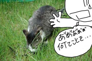 のおおおおおおお〜〜〜っ!撃墜したツバメをネコが食ってます。な、なんてことを・・・