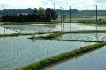 田植えが終わったばかりの頃の水田。全面空が写っています。