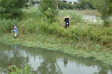 水が多く、なかなか草が刈りにくいようです。