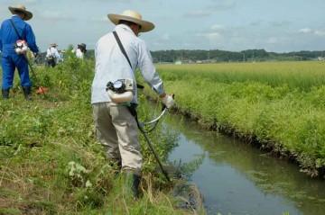 コチラは地区の北よりの端、水路に沿って伸びた草を刈ります。足場が悪くなかなか大変です。