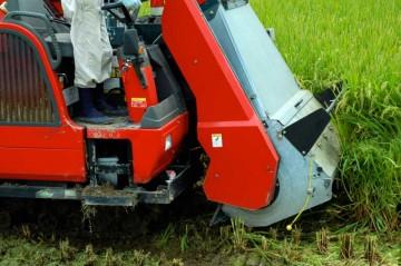 土がつくと発酵しにくくなるので、あまり根元から刈らないようにしているそうです。