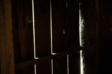 何という風通しの良さ!その室内?は薄暗く、自分が何かの動物になったみたいになるけど、妙に落ち着きます。