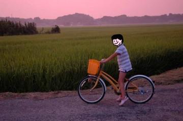 稲も自転車もヒトも何もかもピンク色に染まっちゃいます。