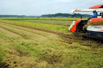 ER108でコシヒカリの稲刈り