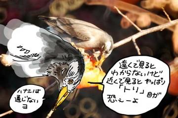 鳥はすべて恐竜の子孫・・・と思われるショット。日差しが強くて瞳孔が小さくなっていたのかなあ・・・(そもそも鳥に瞳孔はあるの?)話の通じそうもないのはムクドリも同じでした。