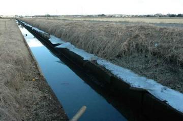 用水路日陰側法面の麓、氷がずっとできています。