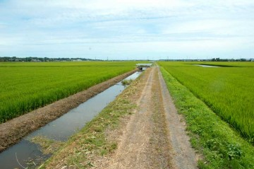 夏はこうです 用水路に水がたくさん! 米作りのため、みんなが水を必要としているので、ポンプで水を汲んで田んぼに配り、余った水が用水路を満たしています、それにしても夏の緑のまぶしいこと!