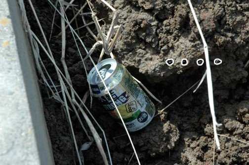農地・水・保全管理支払交付金 共同活動