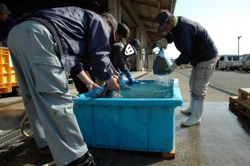 常澄産コシヒカリ/飼料稲の生産 水戸市大場町島地区生産組合
