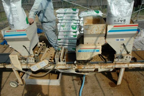 平成24年度の茨城県常澄産コシヒカリ/飼料稲作り