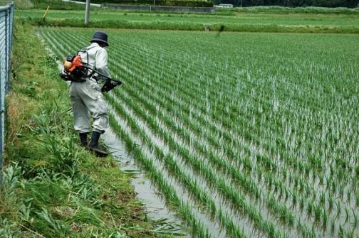 農地・水保全管理支払交付金 農用地法面の草刈り