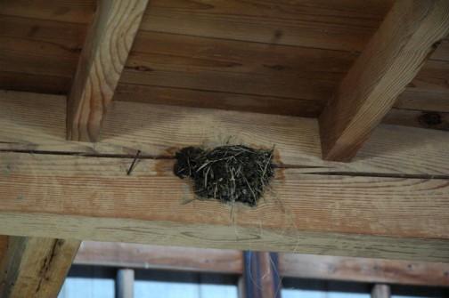 こんどは新たに別の場所に巣を作り始めました