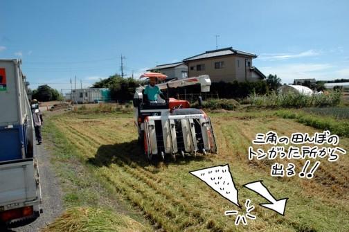 稲刈り このまままっすぐ出て行きます
