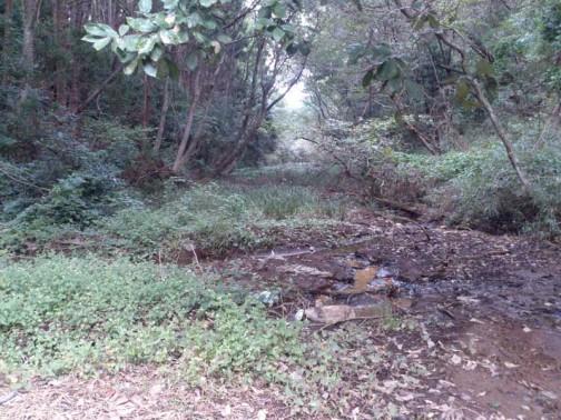 とても勘十郎堀沿いに歩いてなんか行けないじゃないか!!ちょっと降りてみたがズブズブの沼地だ。カンジキを履けば歩けるのだろうか?