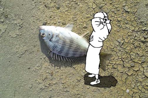 例えばこんな感じ。超巨大クロダイ釣り上げられる!何だかおもしろいなあ。