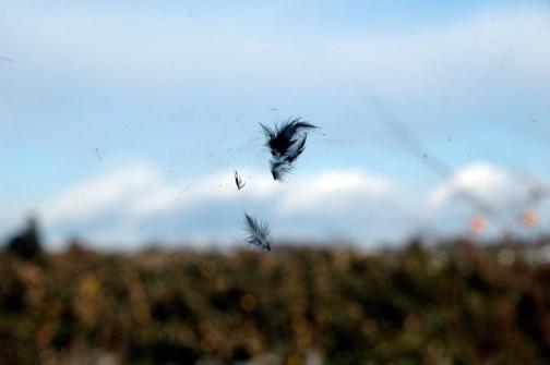 ト・トリの羽根が・・・ねちょっとくっついてる・・・