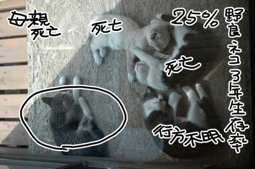 2009年6月頃の写真。母親はすでに死亡。後に残るのはキジネコのトラだけ。