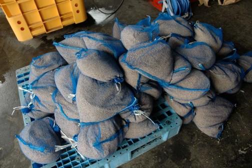 飼料稲の種