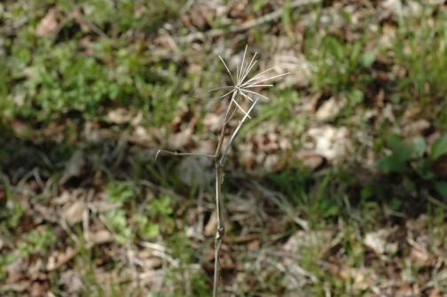 ピクニックで見つけた「植物遺跡」 ウチワの骨みたいなものがドンドコ突っ立っています。