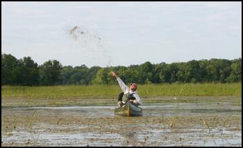 写真小さいですけど、田舟に乗って手で米の種をぶちまけてます。どこまで播いたか忘れないようにしないといけませんね。