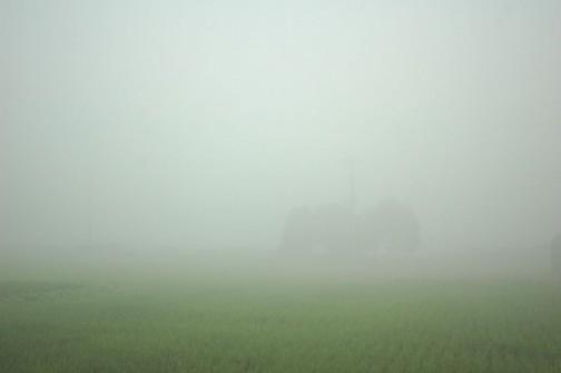 朝起きたらエラい霧・・・一寸先も見えません。暑い一日が始まるんだなあ・・・