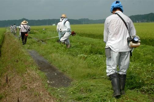 農道の草刈り。たくさんいますけどこれでほぼ全員。予備部隊はいません。