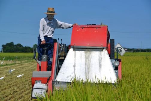 まずはこのヤンマーのYWH1400Aコンバインロールベーラーで飼料稲を刈取って円筒形の筒に丸めます。