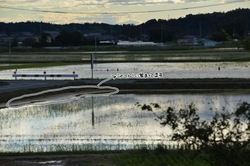 10/26日、台風26号が通り過ぎて雨があがった状態。田んぼの隅に稲藁が吹き寄せられているのが見えます。