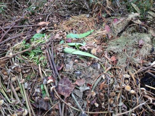 枯れ草が集められたタヌキの寝床。自分で作ったのでしょうか?