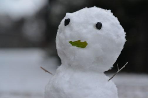 昨日の写真です。あっという間に積もって小さな雪だるまが作られていました。さっき外を覗いたら、まだたくさん雪が残っていました。昨日は暗くなってからはもう止んでいたので、相当気温が下がったんだなあ・・・今日は快晴です。