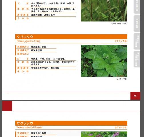 「クリンソウ」も茨城県レッドデータブックに載ってます