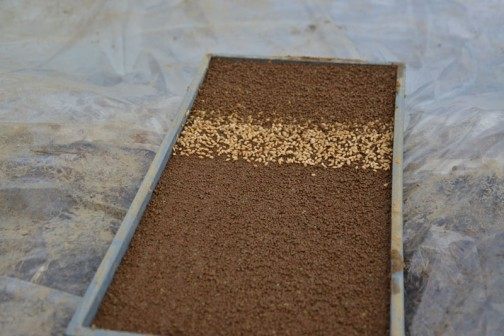 水戸市大場町「農業」2014年度の(平成26年度)米作り。 コシヒカリと飼料稲の種まき。