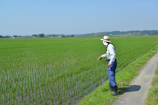 農用地 「遊休農地等の発生状況の把握」 お約束の絵面と言った感じでしょうか?