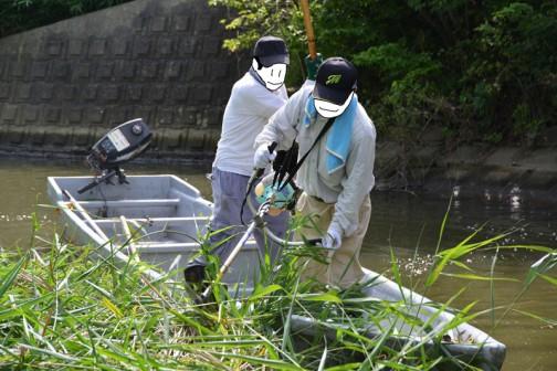 水が深い所は船から刈ります。