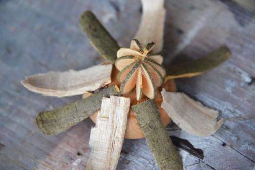 こちらもクリのイガイガを取り除いて、カナメモチをスライスした栗のイガ風ぼんぼりを付けます。白い木屑はホオ材なので、それは残し、カナメモチの皮を削って杉の皮と取り替えます。