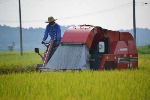 ヤンマーYM-1400コンバインでの稲刈り