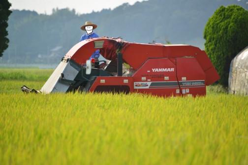 ヤンマーYM-1400コンバインでの稲刈り1