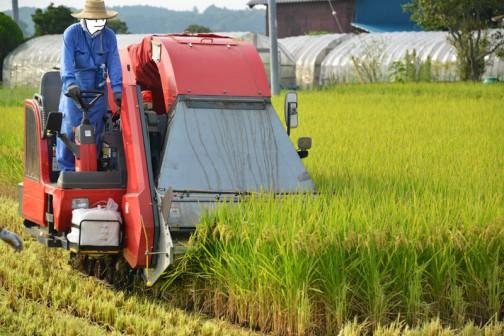 ヤンマーYM-1400コンバインでの稲刈り。毎年のことなので、とりたてて変わったことはありません。機材も例年通り。