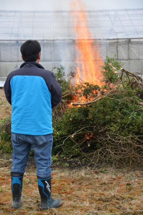 そうこうしているうちに、どんどん切られた枝が積み上がっていき、それにつれてどんどん炎も高く上がっていきます。。
