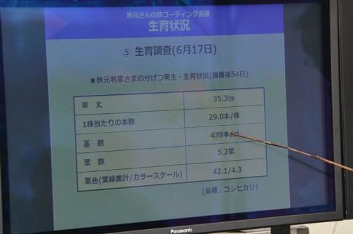 生育状況 5.生育調査(6月17日)