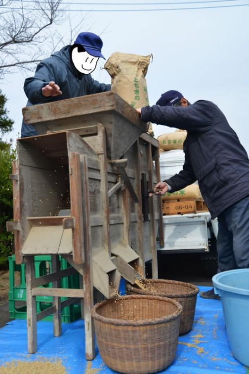 飼料稲の選別 種もみは田んぼ1枚から採取しているそうです。トラック1台分もある!