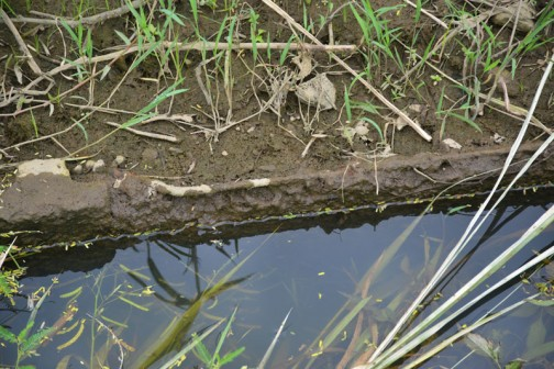 ボロボロになっていた水路の柵板(普通にこう書いていますが、初めは「さくばん」と聞いても漢字がイメージできませんでした)
