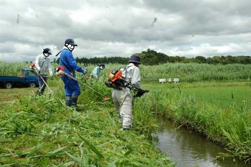 水路の法面の草刈り