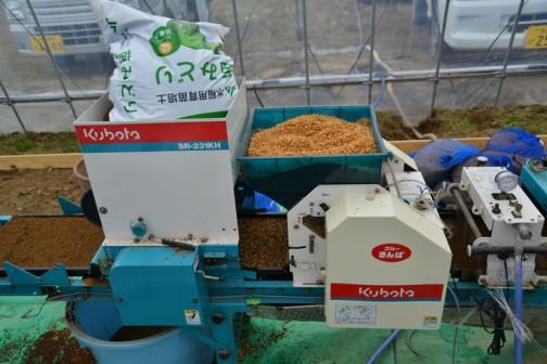 飼料稲の種まき