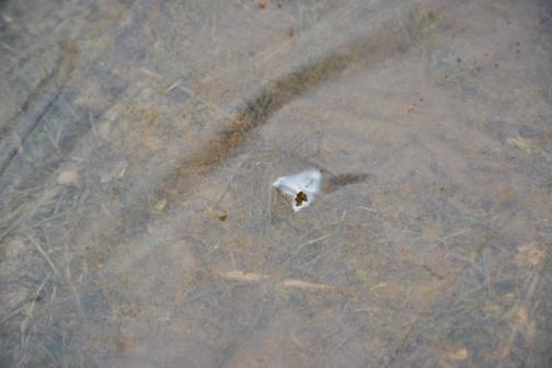 プール育苗するのですが、ビニールに穴があいています。これだけの穴でも一晩で水が抜けちゃうそうです。