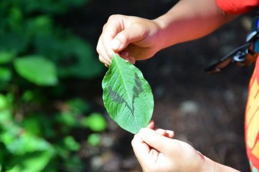宇宙人?怪人マスク?この葉っぱが無数に林の中に・・・
