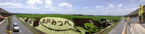 水戸市川又町田んぼアート協議会の「田んぼアート」。7/23(日)は田んぼアートまつりだそうです。
